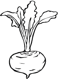 0 images about lettuce turnip the beet on clip art clipartbarn