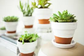Pots For Plants by Painted Pots Succulents Offbeat Inspired