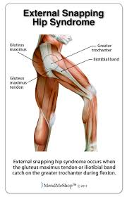 hip and groin platinum physiotherapy