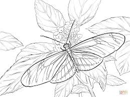 coloring pages of butterfly zebra swallowtail butterfly coloring page free printable