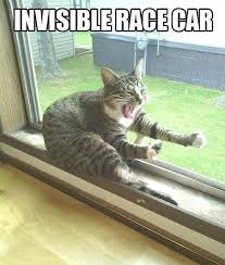 Invisible Cat Memes - cat invisible race car