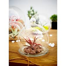 Small Glass Vase Glass Vase Wholesale Mini Glass Bell Jar Cloche Terrariums With