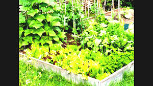 small kitchen garden ideas small kitchen garden ideas garden design ideas