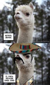 Alpaca Sheep Meme - alpaca memes best collection of funny alpaca pictures