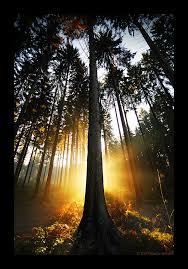 tree of light by marcoheisler on deviantart