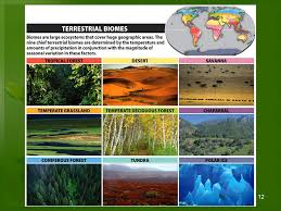 ecosystems u0026 communities organisms and their environments ppt