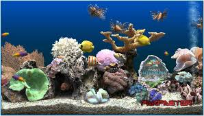 halloween 3d screensaver marine aquarium 3 screensaver keycode download free