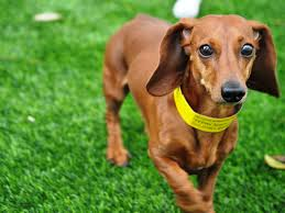 pet turf artificial grass for dogs houston texas