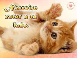 imagenes de gatitos sin frases frases de amor para los amantes de los gatos