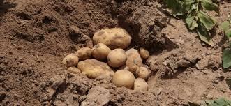 consommation chambre froide chambre froide solaire pour conserver des pommes de terre