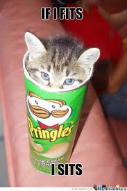 Cat Sitting Meme - how about some pringles nah the cat is sitting in by