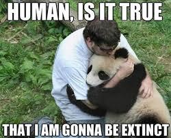 Panda Mascara Meme - panda quotes panda sayings panda picture quotes 67511 quotesnew com