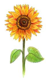 coloring page surprising drawing a sunflower watercolor tattoo