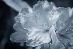 silver flowers silver flowers royalty free stock images image 4229089