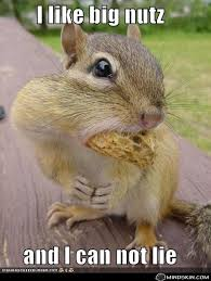 Squirrel Nuts Meme - i 3 nuts caught the laughter pinterest squirrel and funny