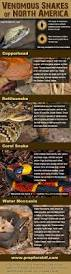 49 best desert snakes images on pinterest snakes reptiles and
