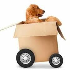 college movers san mateo pbtp moving company san mateo get quote movers san mateo