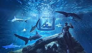 would you try airbnb u0027s underwater room in a shark tank