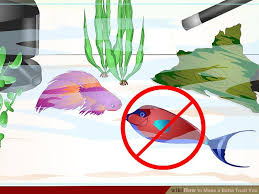 Beta Fish In Vase How To Make A Betta Trust You With Pictures Wikihow
