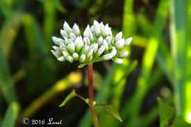 what plants are native to florida what florida native plant is blooming today daily photo of