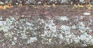 How To Remove Lichen From Patio Removing Lichen From Granite Hometalk