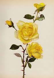 25 unique yellow rose tattoos ideas on pinterest tattoo rose