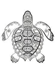 La tortue marine à colorier du dimanche …  In the sea color me