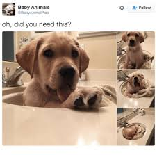 Baby Animal Memes - 25 best memes about anime baby animals anime baby animals memes
