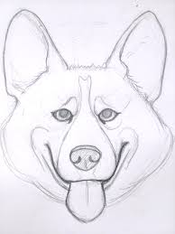 drawn corgi face pencil and in color drawn corgi face