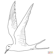 flying arctic tern coloring page free printable coloring pages
