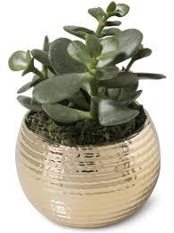 succulent kits indoor succulent garden mini magnet holiday succulent garden