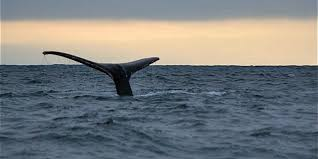 mendocino whale watching visit california