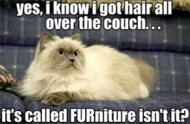Meme Hair Removal - pet hair removal