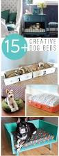 Dog Bunk Beds Furniture by 930 Best Spoiled Puppy Images On Pinterest Dog Bunk Beds Dog