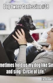 Dog Owner Meme - 38 funny heartwarming share worthy dog memes gallery dogtime