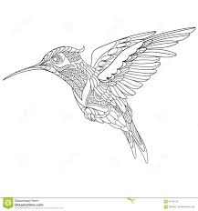 zentangle stylized hummingbird stock vector image 67559131