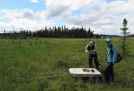 Alaska Fires Permafrost by Researchers Say Kenai Peninsula Permafrost Thawing Rapidly