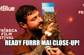 Lil Bub Meme - cat walks red carpet at world premiere of meme documentary lil