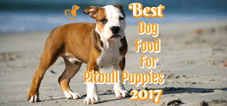 2 month old american pitbull terrier best dog food for pitbull puppies 2017 comparisons and reviews