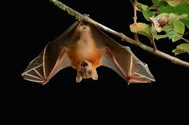 mystery solved how bats can land upside down