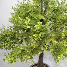 Artificial Boxwood Topiary Trees 80cm Artificial Boxwood Topiary Tree Without Pot Large