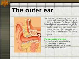 Basic Anatomy Of The Ear Anatomy And Physiology Of Ent Organs