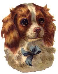 vintage image cute dog spaniel vintage images graphics