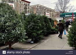 christmas tree for sale new york city fresh christmas trees from carolina displayed