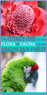 the ultimate guide to the flora and fauna of the amazon rain forest
