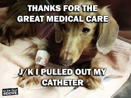 Vet Tech Memes - 279 best vet tech love images on pinterest work humor vet