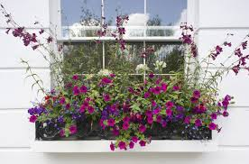 Flowers For Window Boxes Partial Shade - copy these window boxes