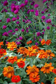 Summer Flower Garden Ideas - 46 best annuals in the landscape images on pinterest flowers