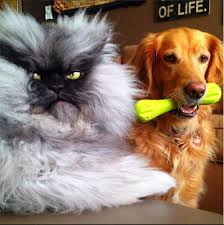 Colonel Meow Memes - i bring you colonel meow album on imgur