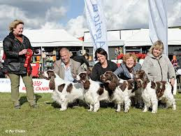 affenpinscher uppf are sydskånska kennelklubben u003cbr u003einternationell hundutställning 2017